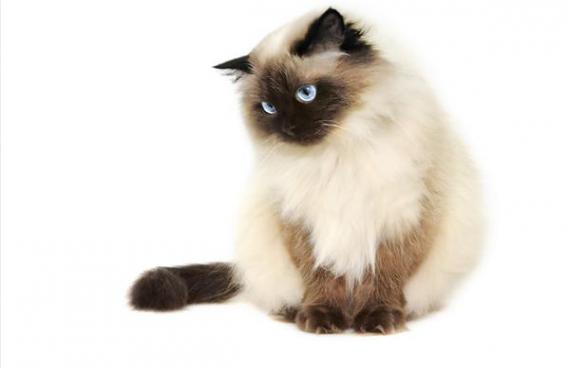 Έλλειψη Εμπιστοσύνης Της Γάτας
