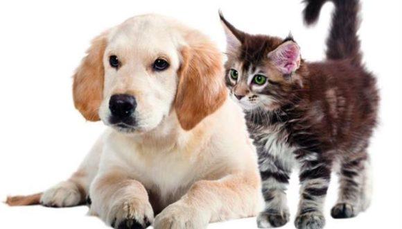 Αρθρίτιδα Και Δυσκαμψία Σε Σκύλο Και Γάτα
