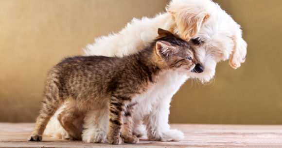 Βήχας Και Βρογχικά Στο Σκύλο Και Στη Γάτα