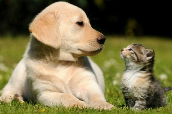 Δερματοπάθειες Σκύλου Και Γάτας