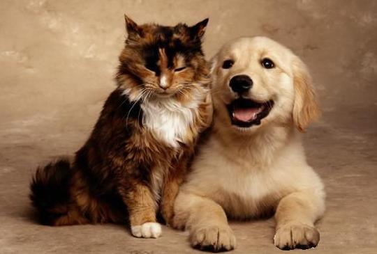 Δυσκοιλιότητα Στο Σκύλο Και Στη Γάτα