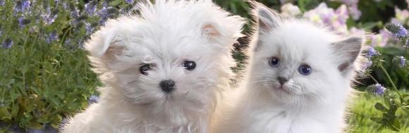 Επιληψία Σε Σκύλους Και Γάτες