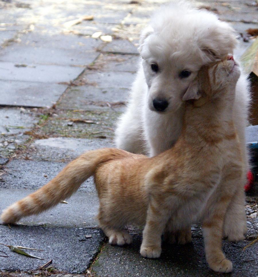 Μάδημα Από Σκύλο Και Γάτα