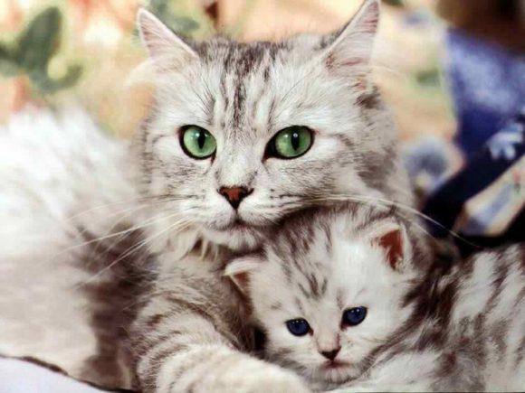 Μετακόμιση Με Τη Γάτα Σας