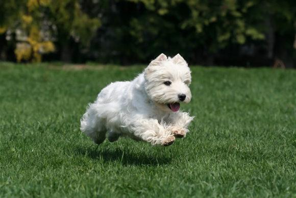 Σκύλος Και Ανορεξία