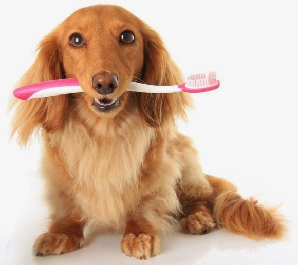 Στοματική Υγιεινή Σκύλου