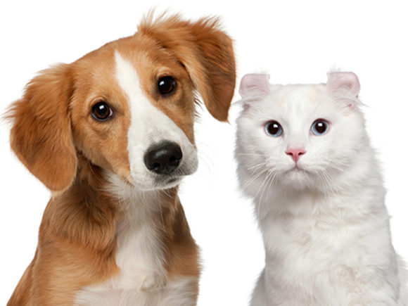 Infections In Pets