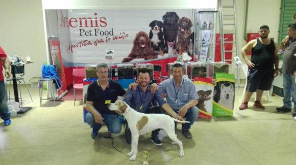 Έκθεση Μορφολογίας Σκύλων 3 & 4 Ιουνίου 6